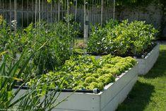 Grădinăritul biointensiv - gardenbio.ro Raised Beds, Home And Garden, Outdoor Structures, Organic, Plants, House, Sun, Home, Flower Beds