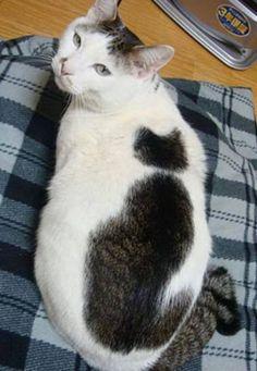 strange fur patterns-Cat within a cat