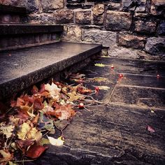 Wet Stone Steps #fall #color #ny #photography
