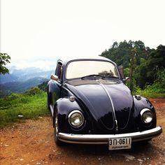 My bug on the high hill thailand