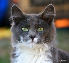 Wobbles Cats, Photography, Animals, Gatos, Photograph, Animales, Animaux, Fotografie, Photoshoot