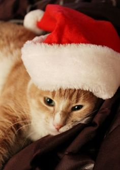 Christmas  kitty  Waiting Up For Santa by MadiUhart.
