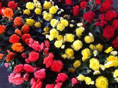 Color! at the @LeeAnn Plunkett FarmersMarket