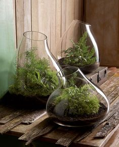 Terrariums What is a terrarium? The best definition for a terrarium is a mini indoor garden kept in a glass container. Terrarium's are perfect for those who have little time for gardening or just. Terrarium Diy, How To Make Terrariums, Glass Terrarium, Terrarium Containers, Glass Containers, Glass Planter, Glass Vase, Terrarium Supplies, Glass Teapot