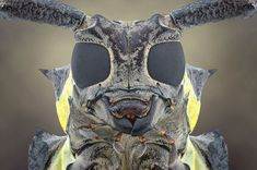 INSECTS POTRAITS
