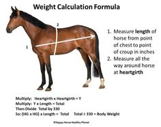 How to estimate your horse's weight | Happy Horse Healthy Planet_Weight Calculation