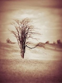 "Saatchi Online Artist Dawn Mercer; Photography, ""Serenity By Nature Tree"" #art Beautiful serene meadow with single surreal tree done in a fine sepia colour. Dreamy and creative countryside landscape, peaceful beauty of the land. Canadian landscape tree photograph, creative nature photography. Available in various prints, on canvas or have it framed. Great selection of unique artwork.  Serenity By Nature Tree - Copyright 2012 Dawn Mercer, Canadian Artist"