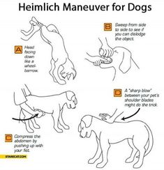 Hopefully you will never have to use but it could be useful information to have just in case. Heimlich Maneuver for Dogs, four ways that can help you save your if they get something lodged.