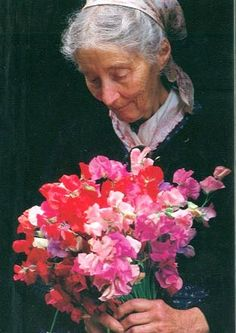 LIFE AT WILDBERRY COTTAGE:  Tasha Tudor ... She was known for her heirloom sweetpeas, which were abundant and grew above her head.  Manure tea was her secret.