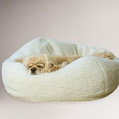 For the fur babies ... now maybe they'll sleep in their own Sherpa Pet Bed!  @Cost Plus World Market