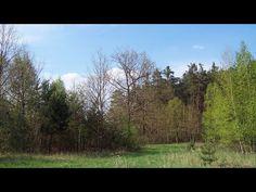 Na tym zdjęciu widać jeszcze nie do końca rozkwitłą florę. Widać to na przykład w przypadku drzew widocznych najbliżej na fotografii.