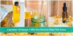 Ready to learn how to make calendula oil at home? This recipe is so easy, you just can't get it wrong -- but don't let that fool you! All of the awesome calendula oil uses will have you reaching for it every day. Oils For Scars, Calendula Oil, Herbal Oil, Infused Oils, Homeopathic Medicine, Herbal Remedies, Natural Remedies, Oil Uses, Medicinal Herbs