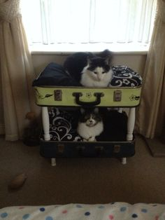 Upcycled suitcases to cat bunk beds.  Very happy customers