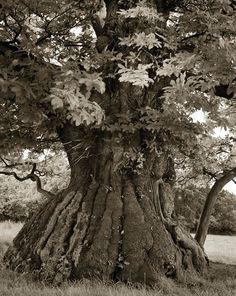 Mulher passa 14 anos fotografado as árvores mais antigas do mundo
