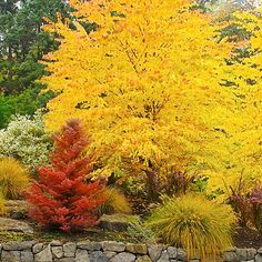 landscaping with evergreen shrubs different shapes and colors - Google Search