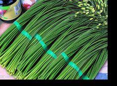 健康一級棒: 男性的福音 韮菜的超強功用 等同於壯陽藥的食物!!!!!!