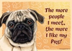 "The more I meet people sign/magnet Fawn Pug  Express Yourself Signs - 5"" x 7"" plastic signs that have a magnet and a Velcro button on the back - great for hanging in an office cubicle or any where you can put a magnet!"
