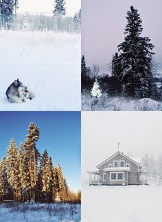 winter, snow, finland, log cabin, log house, log house, alaskanmalamute, forest, winter wonderland, Visit Finland, Tarja's Snow Land