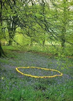 Andy Goldsworthy A distillation of all that is magical. Enclose it in a fairy ring.