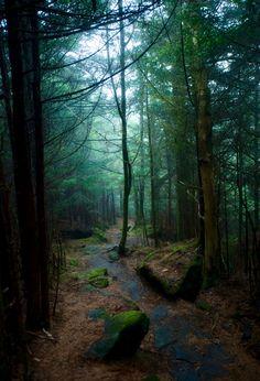Richard Balsam Trail. Photo by Geoff Sills. Source Flickr.com