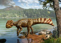 Koreaceratops hwaseongensis • the First Ceratopsian dinosaur in the Korean peninsula — A Swimming Ceratopsian?