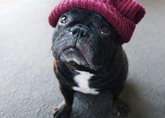 French Bulldog Hipster in a Ski Cap
