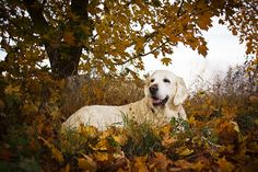 Autumn by Eva Lind on 500px