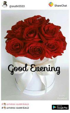 Good Evening Love, Good Night I Love You, Love You Gif, Good Morning Good Night, Good Morning Quotes, Good Evening Greetings, Love Rose, Learn English, Merlin