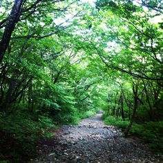 Engage in shinrin-yoku (森林浴) - forest bathing... (a relaxation technique used in Japan).