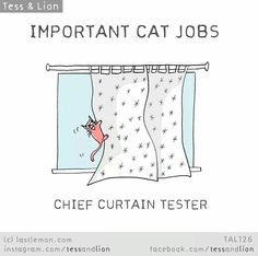 important cat jobs | chief curtain tester