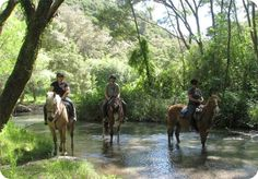 Horse Riding in Rotorua, New Zealand
