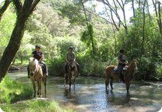 Kawerau Activities - Tui Glen Horse Treks, Bay of Plenty, New Zealand Australia Landscape, Living In New Zealand, Forest Landscape, New Zealand Travel, Heaven On Earth, Horse Riding, Horseback Riding, Trip Planning, Places To See