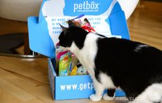 http://www.glogirly.com/2014/03/get-your-own-petbox-giveaway.html