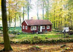 Drömmen om ett rött hus med vita knutar blev sann i den skånska bokskogen. Kolla in denna favorit från i höstas!