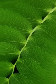 Phone Wallpaper Design, Plant Wallpaper, Cute Patterns Wallpaper, Green Art, Go Green, Green Theme, Green Colors, Photographie Macro Nature, Never Settle Wallpapers