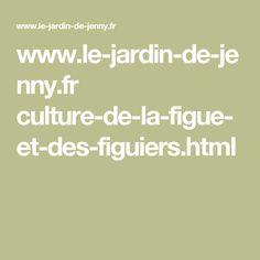 www.le-jardin-de-jenny.fr culture-de-la-figue-et-des-figuiers.html