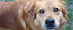 Do Dogs Get Jealous, Researchers Have Proof (We Already Knew The Answer, Didn't We?)