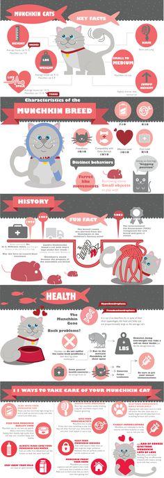 Infographic: Munchki