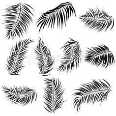 Palm fronds for possible background pattern (style sheets)