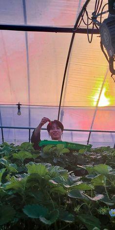 Jungkook and strawberry Foto Bts, Foto Jungkook, Kookie Bts, Bts Bangtan Boy, Army Wallpaper, Bts Wallpaper, Bts Aesthetic Pictures, Bts Backgrounds, Kpop