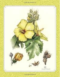 Картинки по запросу Botanical Drawing in Color: A Basic Guide to Mastering Realistic Form and Naturalistic Color