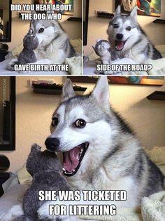 Husky Humor, Funny Husky Meme, Puns Jokes, Corny Jokes, Funny Jokes To Tell, Funny Animal Jokes, Pun Husky, Dad Jokes, Funny Animals