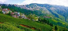 Our story of Darjeeling begins thousands of miles away from its lush valleys and snow-capped hills
