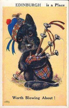 TARTAN: Scottie Dog With Tartan Tam and Bagpipe, Views of Edinburgh Scotland postcard, Tartan, Plaid, Scottish Animals, Le Clan, Pitbull, Vintage Dog, Westies, Dog Art, Dog Life