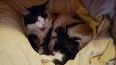 Müsli ist Mama #hablkatzen #babycat