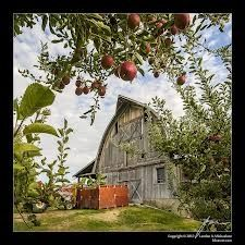 Apple Orchard  For the Farm girl at heart.  Great kitchen poster