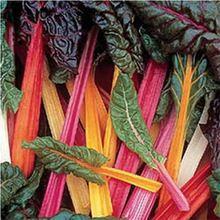 Rainbow Hot leafy beet seed nutrition vegetable 30 seeds(China (Mainland))