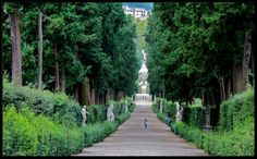Viottolone - garden's main thoroughfare which ran east–west along the entire length of the grounds. The Viottolone was as wide as a two-lane road and lined by a row of slender, four-hundred-year-old cypress trees.