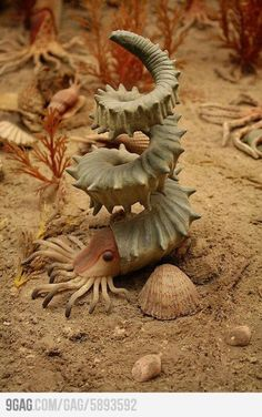 whoah..strange awesome looking creature of the sea