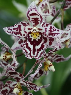 Awesome Orchid!